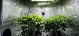 Understanding Light Spectrum of LEDs – Cannabis Growing Tip